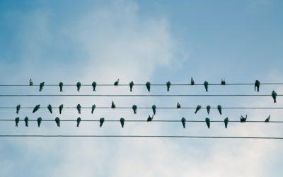 Wat nieuw organiseren echt succesvol maakt